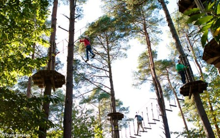 Going Ape in Dalby Forest