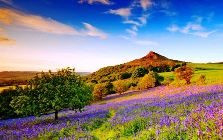 Roseberry Topping and the bluebells - Colin Carter